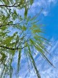 Piękny niebieskie niebo z i drzewo zdjęcia royalty free