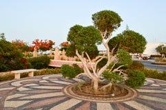 Piękny niezwykły egzotyczny drzewo z zieleń liści gałąź i bagażnik zawijający, zawijający w białej arkanie, nici, fryzuje zdjęcia royalty free