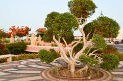 Piękny niezwykły egzotyczny drzewo z zieleń liści gałąź i bagażnik zawijający, zawijający w białej arkanie, nici, fryzuje obraz royalty free