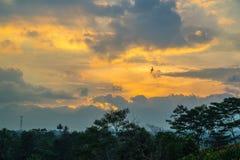 Piękny oceanu nieba głąbik z ptakiem uwalnia latanie Fotografia Royalty Free