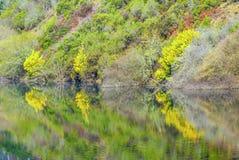 Piękny odbicie kwiatonośni krzaki w lustrzanej powierzchni Sil rzeka w Galicia, Hiszpania zdjęcie royalty free