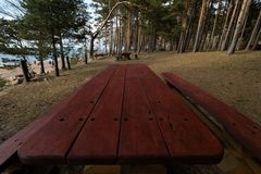 Piękny odległy pinkinu i campingu punkt blisko morza bałtyckiego w sosnowym lesie z głazem wyrzucać na brzeg w tle - zdjęcie stock