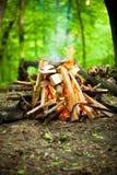 Piękny ogień w lesie Zdjęcia Royalty Free