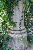 Piękny ogrodowy dekoracyjny grecki rzymski kamienny dziejowy filar przerastający z bluszcza tła dekoracją obraz royalty free