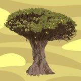 Piękny ogromny wektorowy drzewo ilustracja wektor