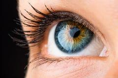Piękny oko makro- fotografia royalty free