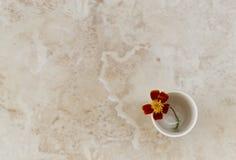 Piękny okwitnięcie nagietek Kwiat w wazie Obrazy Royalty Free