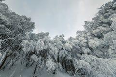 Piękny opad śniegu w marzycielskim zima lasu krajobrazie Zdjęcie Stock