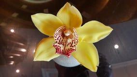 Piękny Osobliwy Żółty kwiat obrazy royalty free