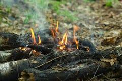 Piękny płomień ogień brzoza fotografia stock
