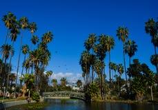 Piękny palma krajobraz z głębii niebieskim niebem fotografia royalty free