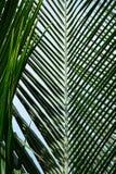 Piękny palma liścia tło obrazy stock