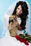 piękny panny młodej brunetki pies Obrazy Royalty Free