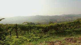 Piękny panoramiczny widok Włoska dolina z winnicami, konik je winogrona panorama zbiory