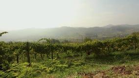 Piękny panoramiczny widok Włoska dolina z winnicami, konik je winogrona panorama zbiory wideo
