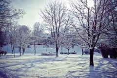 Piękny park w zimie fotografia stock