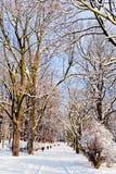 Piękny park w zimie obrazy stock
