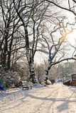 Piękny park w zimie obraz royalty free