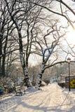 Piękny park w zimie fotografia royalty free
