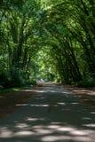 Piękny Parkowy scena park publicznie zdjęcie royalty free