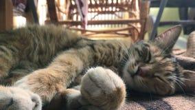 Piękny pasiasty kot kłama na ulicie zdjęcie wideo