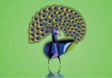 Piękny paw z otwartą ogon ilustracją Fotografia Royalty Free