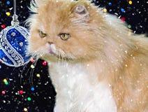 Piękny perski kot w Bożenarodzeniowym wystroju Obrazy Royalty Free