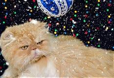 Piękny perski kot w Bożenarodzeniowym wystroju Fotografia Royalty Free