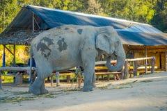 Piękny plenerowy widok ogromny słonia pachyderm odprowadzenie blisko do drewnianej budy lokalizować wśrodku dżungli sanktuarium w obraz royalty free