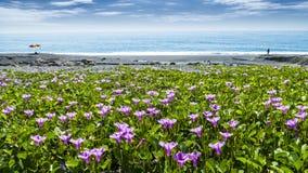 Piękny pnk kwiat obok plaży z ładnym tło kolorem zdjęcia royalty free