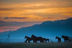 Piękny podpalanego konia stado pasa w górach przy zmierzchem, zadziwiającego modnisia pogodny naturalny tło Obraz Stock