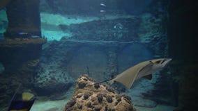 Piękny podwodny świat, nadwodni zwierzęta pływa w wielkim akwarium zbiory