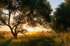 Piękny pogodny lato ranku krajobraz zdjęcia royalty free