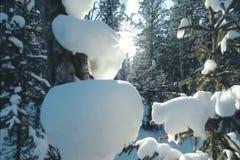 Piękny Pogodny ranek w lesie w szerokim Syberia zdjęcie wideo