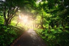 Piękny pokojowy krajobraz; ścieżka w starym zieleń parku obraz royalty free