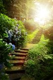 Piękny pokojowy krajobraz; ścieżka w starym zieleń parku obrazy stock
