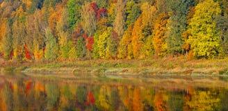 Piękny pomarańcze, czerwieni i zieleni jesieni las, wiele drzewa na pomarańczowym wzgórze panoramy odbiciu na wodzie jesienią zbl zdjęcie royalty free