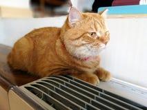 Piękny pomarańczowy kot odpoczywa na stole obok lotniczego pudełka zdjęcia royalty free