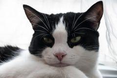 Piękny portret młody kot Zdjęcia Royalty Free