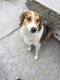 Piękny przybłąkany pies Fotografia Royalty Free