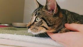 Piękny przyglądający się kot zdjęcie royalty free