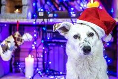 piękny psi biel dzieci święta Claus kapelusza zdjęcie matki grać to mikołaj nosi boże narodzenie nowy rok szczęśliwy wesoło Zdjęcia Royalty Free