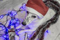 piękny psi biel dzieci święta Claus kapelusza zdjęcie matki grać to mikołaj nosi boże narodzenie nowy rok szczęśliwy wesoło Fotografia Stock