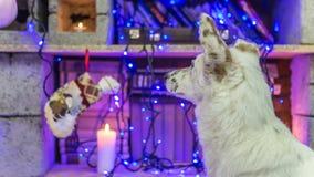 piękny psi biel dzieci święta Claus kapelusza zdjęcie matki grać to mikołaj nosi boże narodzenie nowy rok szczęśliwy wesoło Zdjęcia Stock