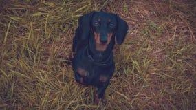 Piękny psi spojrzenie zdjęcie stock