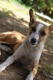 Piękny psi zwierzę domowe Zdjęcia Royalty Free