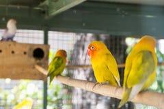 Piękny ptak, miłość ptak Zdjęcie Stock