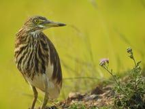 Piękny ptaka dopatrywanie zdjęcie royalty free