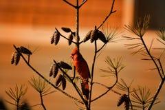 Piękny ptasi obsiadanie na gałąź Zdjęcie Royalty Free