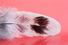 Piękny ptasi upierzenie wzór Puszysty kolorowy piórko na różowym tle Płytka głębia pole selekcyjna ostrość Zdjęcie Stock